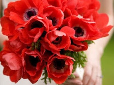 Langage et signification des fleurs coquelicot - 8 ans de mariage noce de ...