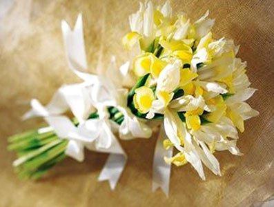 Langage Et Signification Des Fleurs Iris